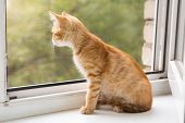 Small, Orange Kitten Lays On The Window-sill
