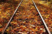 Autumn Leaves On The Railway