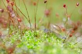 image of garden snail  - Snails and moss macro shot in the garden or forest