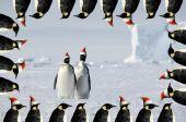 Penguin Couple Xmas Card
