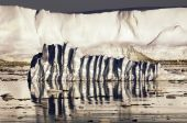 Iceberg Ripples