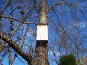 Bat House On Tree