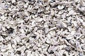 picture of oyster shell  - Background pattern of loads of empty oyster shells in sun light - JPG