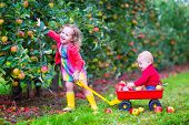 Kids Playing In An Apple Garden