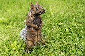 Cute Squirrel In Summer