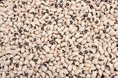 Black Eyed Beans 5154