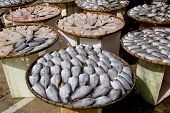 Many Dry Gourami Fishs On Bamboo Plates