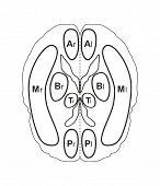 Human brain vector illustration isolated on white