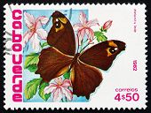 Postage Stamp Cape Verde 1982 Common Evening Brown, Butterfly