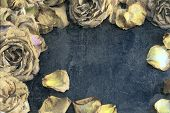 Dried Roses With The Aged Effect