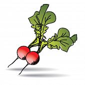 Freehand drawing radish icon - vector eps 10 illustration
