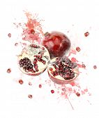 Watercolor Digital Painting Of   Juicy Pomegranate