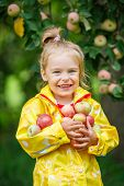 Little girl holding apples in the garden