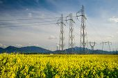 Colza Field And Powerline Electricity