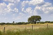 alentejo farm view, in the south of portugal