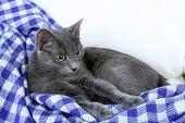 Cat on purple blanket on light background