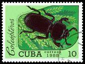 Vintage  Postage Stamp.   Beetle Odontotaenius Zodiacus. Truqui.