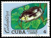 Vintage  Postage Stamp.   Beetle Plusiotis Argenteola. Bates.