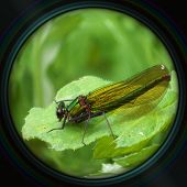 Green Dragonfly On Leaf In Objective Lens
