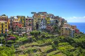 Corniglia - Cinque Terre,italy