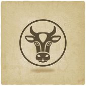 picture of cow head  - cow head old background  - JPG