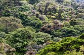 Mountain Rainforest Canopies