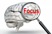 Focus Word On Magnifying Glass And Human Brain