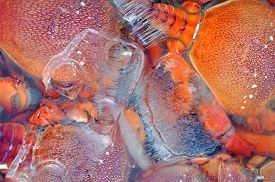 picture of crawdads  - Fresh lobster on ice in a fish market - JPG