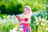 picture of daisy flower  - Kid gardening - JPG
