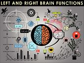 pic of right brain  - Left and right brain functions Cerebral function - JPG