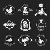 foto of poultry  - Set of poultry farm logo emblem - JPG