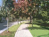Trees sidewalk
