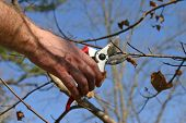 picture of arborist  - Close up of a man - JPG