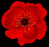 Beautiful abstract red poppy
