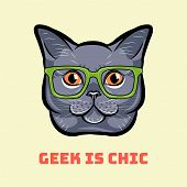 Muzzle Of Gray Cat Wearing In Glasses. Cat Geek. Geek Is Chic. Vector Illustration. poster
