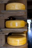 Wielen van kaas