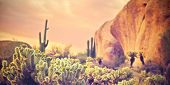picture of chola  - Beautiful desert landscape with Saguaro cacti and red rock buttes - JPG