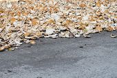 Coconut Shells On Grey Asphalt. Coco Copra Dry. Tropical Fruit Cooking Ingredient. Coconut Copra Pro poster