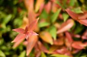 Some Focused Autumn Red Leaves For Background, Beautiful Nature Plant Orange Leaf Background. Red Le poster