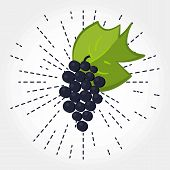 Bunch Of Grapes With Leaf. Vector. Hand Drawen Grape. Isolated Bunch Of Grapes On White Background W poster