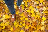 Autumn Background, Leaves, Feet And Shoes. Conceptual Image Of Feet In Sneakers On Yellow Autumn Lea poster