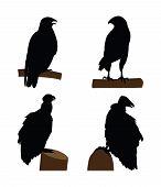 Raptorial birds