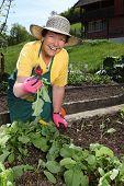 Starší žena zahradnictví