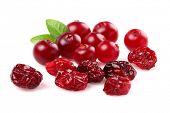 Cranberry seca e fresca