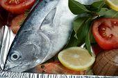 Little Tunny, Tuna, Alby, Albacore, Silver Color.