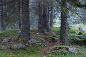 Beautiful forest in Rila mountain