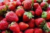 Fresh raw strawberry from farm closeup view