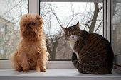 Cat And Dog  Sitting On The Window