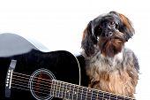 Porträt eines Hochflor Hund mit Gitarre