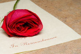 image of funeral  - A funeral bulletin with a single red rose - JPG